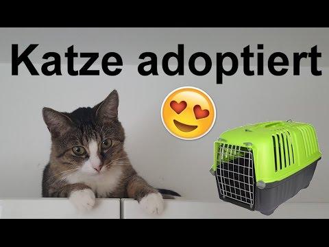 Katze aus Tierheim adoptiert! Einzug + Vergesellschaftung