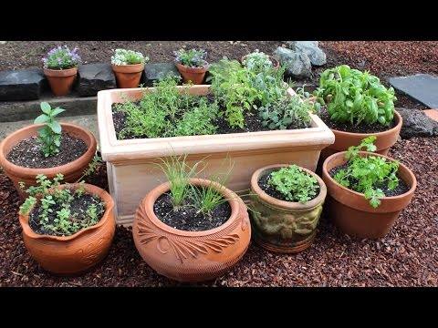9 best herbs to grow indoors beginner level - Best herbs to grow indoors ...