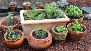 How To Plant A Culinary Herb Garden! DIY Kitchen Garden