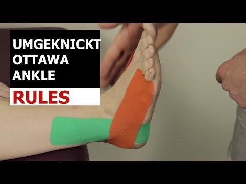 Ultraschall Anatomie des Kniegelenks