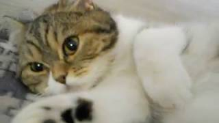 Кошка пукнула и  очень удивилась