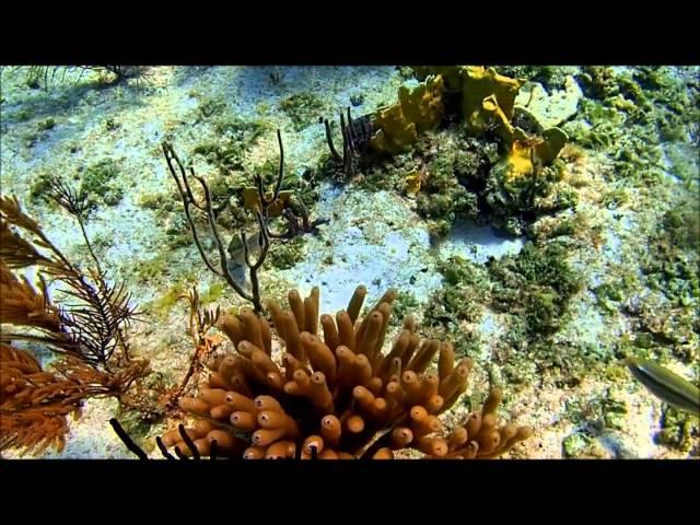 Jardines Del Rey Reef Snorkeling.Cayo Coco, Cuba. Olympus TG-3 Full HD