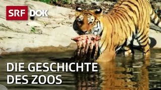 Der Zoo Und Seine Geschichte In Der Schweiz | Zoo Zürich & Zoo Basel | Doku | SRF DOK