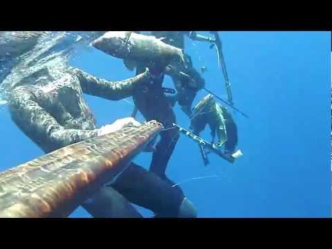 Come rivelare parassiti di pesce