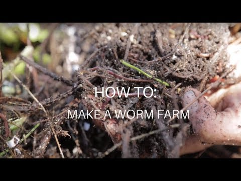 Ever wanted to start your own worm farm but don't know where to start? Watch the video to find out how we do it at Babylonstoren.
