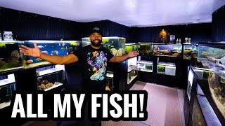 Tazawa Tanks - The Complete FISHROOM TOUR!
