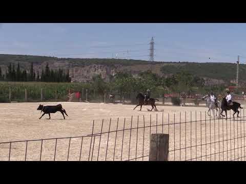 Equitación de Trabajo 290821 Video Manejo Vacas