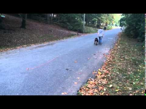 Nyx off leash obedience