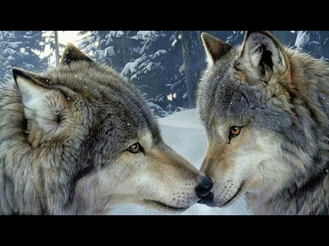 #Paws by Claws ep.11 #kristina kashytska #wolf toys