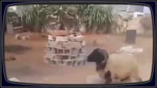 Ржачные Приколы, Угарные видео приколы