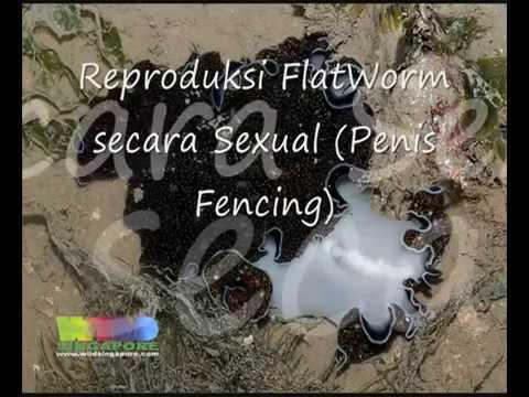 Pinworms a hüvelyben