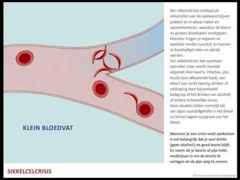 Viermi infecțioși