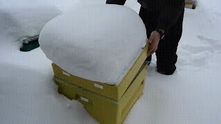 Зимовка в ульях ППУ - февраль. Теплопроводные свойства ППУ в сравнении с деревом.