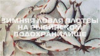 Ловля плотвы на рыбинке зима