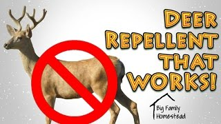 How To Make Deer Repellent THAT WORKS GREAT