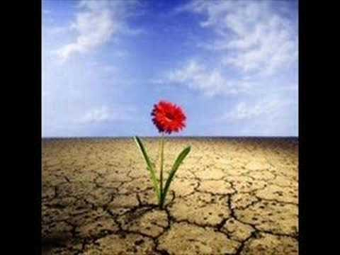 Música Flores No Deserto