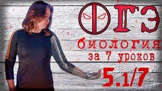 Все ОГЭ биология 2018 за 7 уроков. 5.1/7