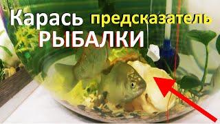 Клев рыбы в нерехте на сегодня и завтра