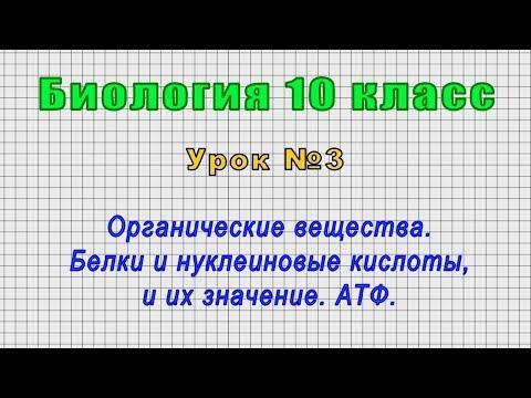 Биология 10 класс (Урок№3 - Органические вещества. Белки и нуклеиновые кислоты, и их значение. АТФ.)
