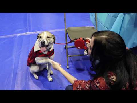 Life is Ruff: A Closer Look into Animal Therapy