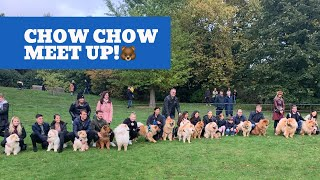 We Went To A Huge Chow Chow Meet Up!