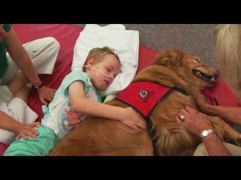 Anteprima Video Video commovente di un bambino paralizzato guarito grazie al suo Cane