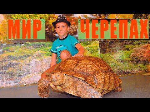 Мир черепах.  Выставка черепах со всего мира - ч2