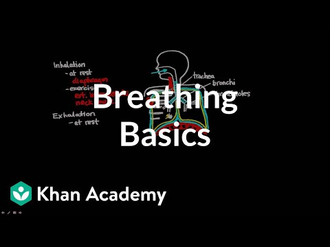 Breathing Basics Video Asthma Khan Academy