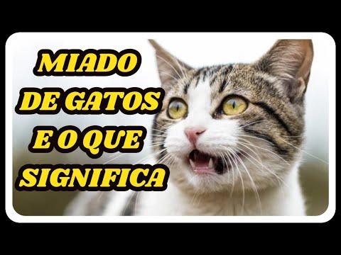 DESCUBRA 6 Sons De Gatos Significados  -  GATO MIANDO