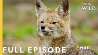 Life without Water (Full Episode) | Wild Chile