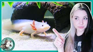 Feeding My Axolotls! // VLOGMAS DAY 3