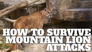 How to Survive Mountain Lion Attacks - HikingGuy.com