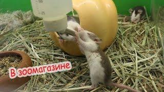 Покупки в зоомагазине. Плохие условия для животных.