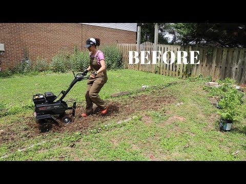 BEFORE & AFTER: I Planted Blueberry Bushes! - Thrift Diving