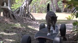 Самый талантливый кот в мире