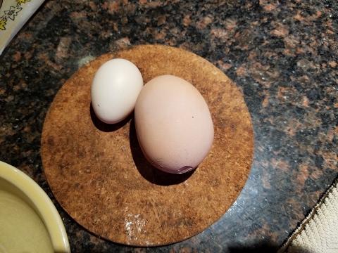 A fully developed egg in an egg