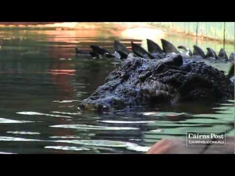 أضخم تمساح يبلغ وزنه طن في استراليا HD