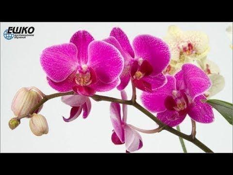 Цветочный дизайн. Основные болезни, вредители и ошибки в уходе за орхидеями в домашних условиях