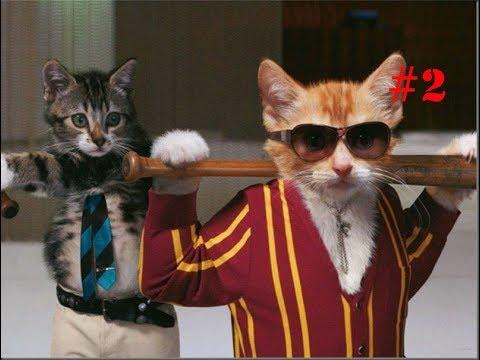 Смешное видео с котиками (Funny Cat) #2