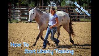 How To Start Liberty Training With Your Horse (Basic Exercises Part 1)