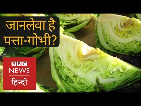 , title : 'How Cabbage and other Vegetables are Dangerous for Your Health? (BBC Hindi)
