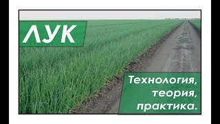 Technology of growing onions in the south of Ukraine