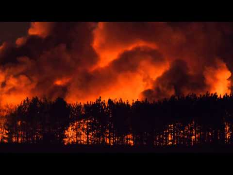Gascoigne Wood - Fire walk with me