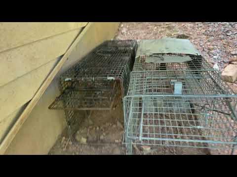 A Positive Way to Retrieve a Groundhog in Franklin Park, NJ
