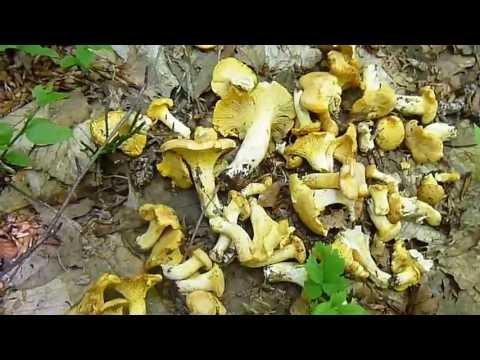 Unghia che si ammorbidisce su una gamba a un fungo