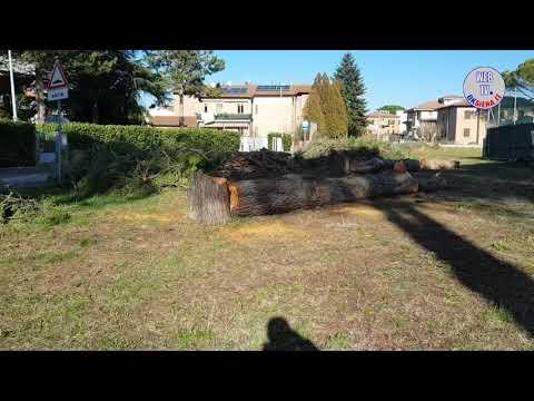 Abbattimento pini Arbia Scalo - La protesta di acuni abitanti della zona