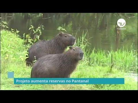 Comissão discute aumento das reservas no Pantanal - 28/08/19