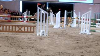 スイス発 障害飛越競技 2017ベルン見本市BEA⑤【スイス情報.com】