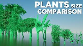 Plants Size Comparison