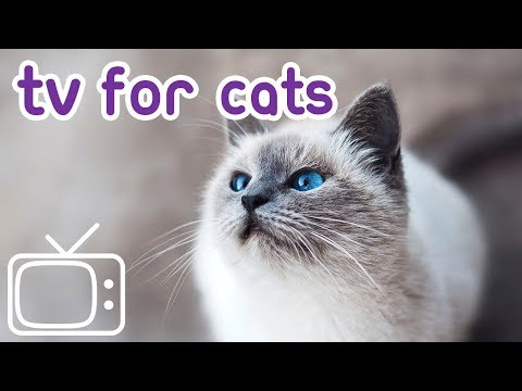 Videos for Cats to Watch! Help Your Cat Relax with TV & Music!